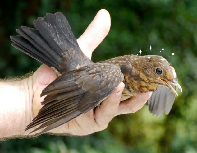 bird_hand_stars